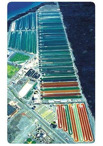 Hawaiian Spirulina Pacifica Üretim Tesisi Görüntüsü